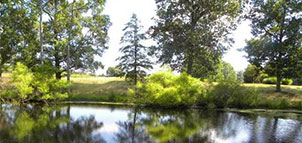 Pond at Breton Bay Golf Club