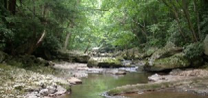 Forest and creek photo