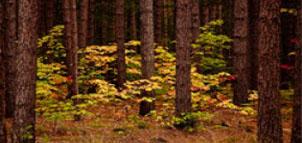 Calleva Haunted Forest