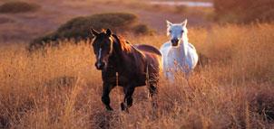 Kent Equestrian