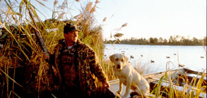 Hunter with yellow lab