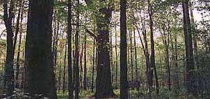 Garrett State Forest