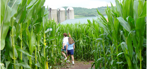Corn Maze photo