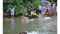 Photo of puppies plunging into the water