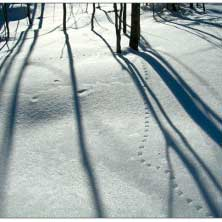 Photo of snowy landscape with winter tracks