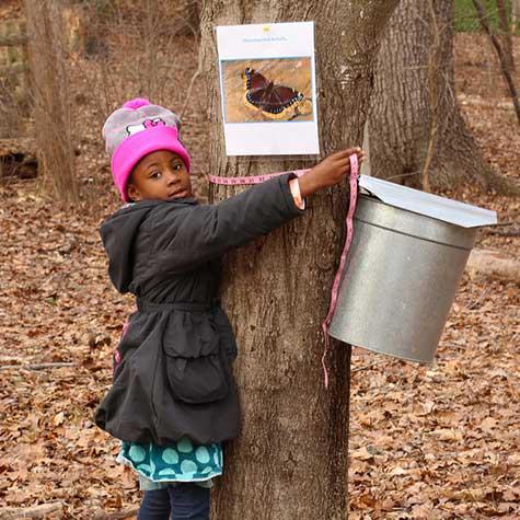 Girl gathers sap at Brookside Nature Center