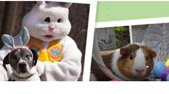 Easter Bunny with Dog, Guinea Pig & Easter Eggs