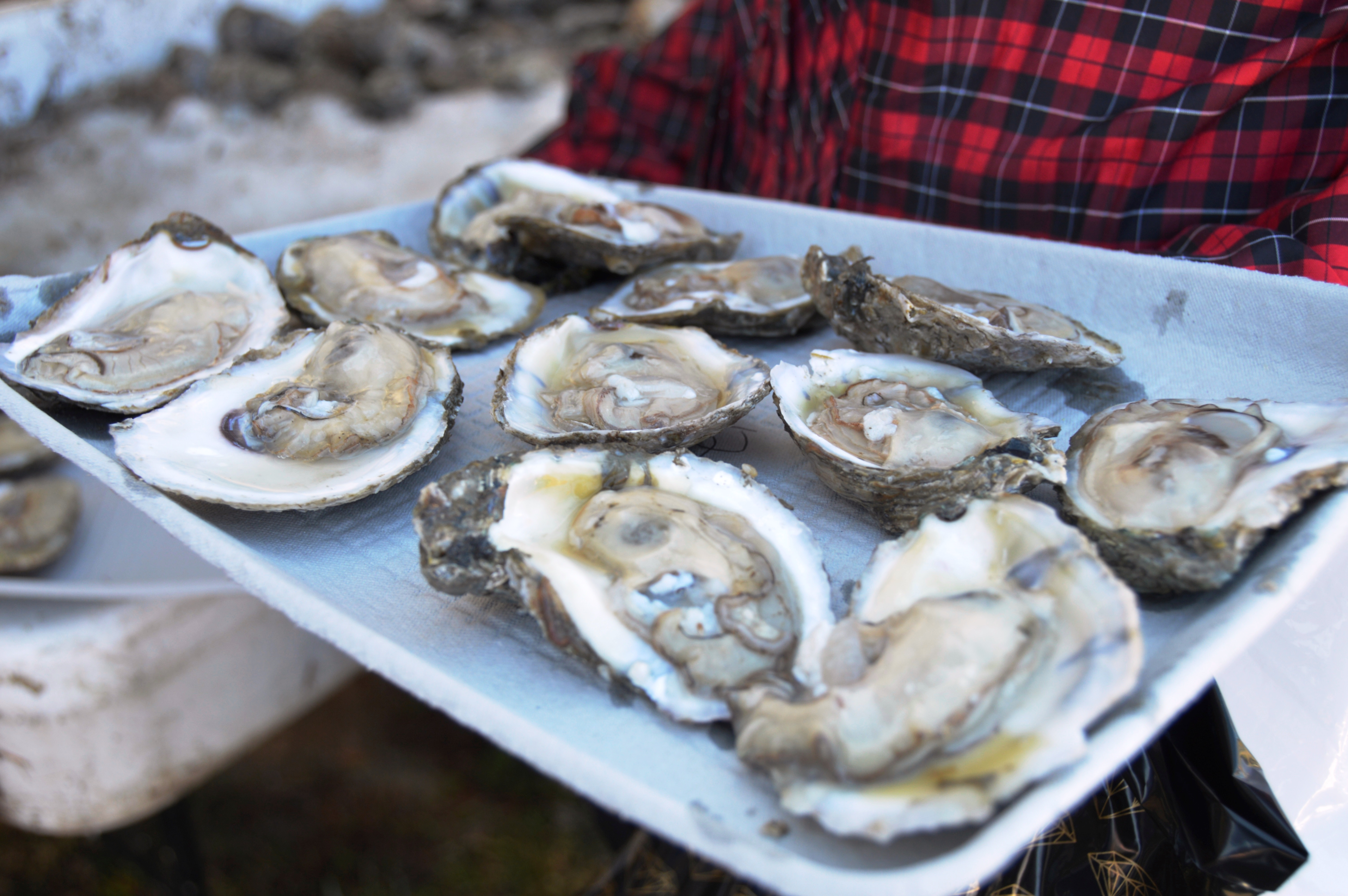 OysterFest at the Chesapeake Bay Maritime Museum