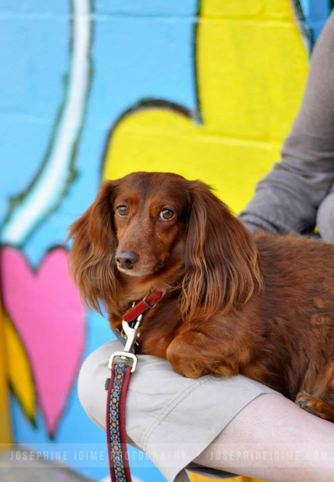 Dog enjoying Dogfest at Bmore Humane Society