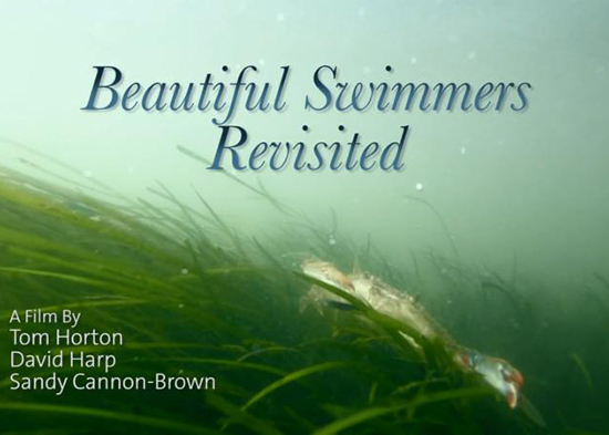 Beautiful Swimmers Revisited poster