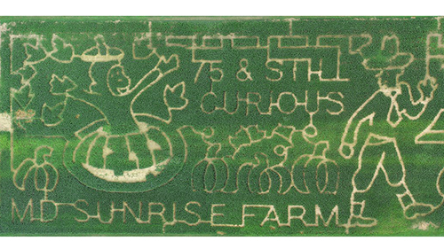 The 8 Acre Corn Maze at MD Sunrise Farm