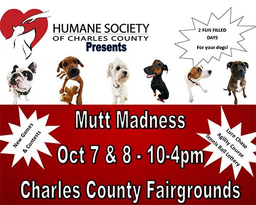 Mutt Madness poster