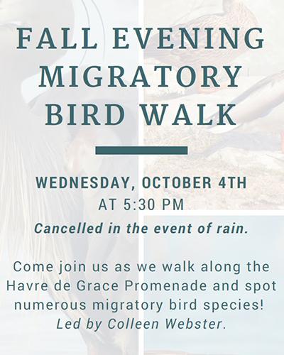 Evening Migratory Bird Walk flyer
