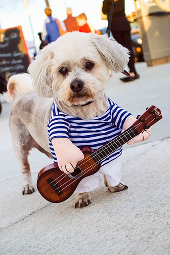 A dog dressed as a guitarist for parade