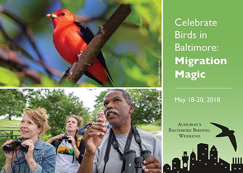 Audubon's Baltimore Birding Weekend
