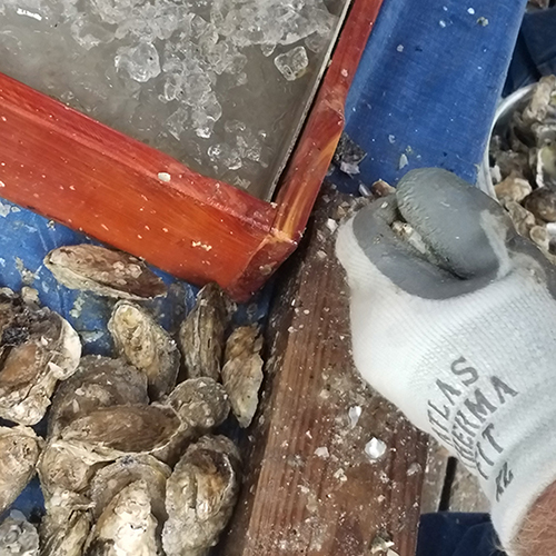 Oyster vendor with his samples