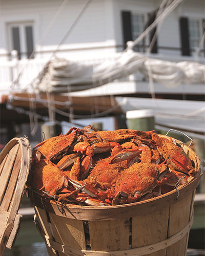 Crabs in a basket at CBMM