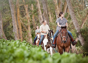Treasure Hunt on Horseback