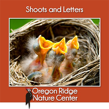Signs of Spring poster with baby birds
