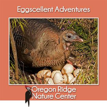 Eggscellent Adventures Poster