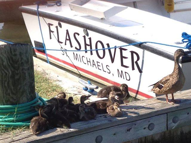 Photo Credit: Flashover Charters