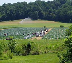 Richardson Farms-White Marsh