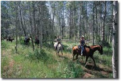 Horse riding through Greenwell State Park