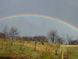 Rainbow over Deep Creek Cellars