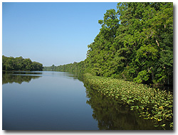 Pocomoke River State Forest