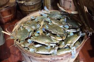 Photo Credit: Chesapeake's Bounty-North Beach