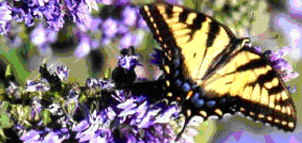 Generic Butterfly image