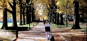 Student walking on tree lined path