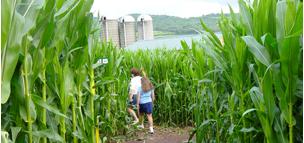 Corn Maze photo