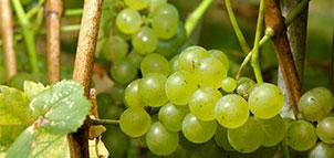 Solomons Island Winery