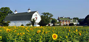 Outside view of Inn with Sunflowers
