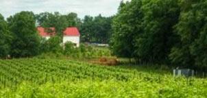 Photo Credit: Knob Hall Winery