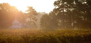 Slack Winery