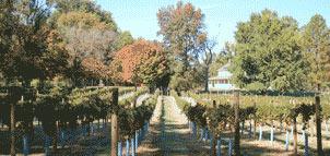 Thanksgiving Farm Wines