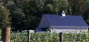 Field at Still Creek Vineyards