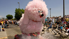 Pink Poodle Kinetic Sculpture participating in Baltimore's Kinetic Sculpture Race.