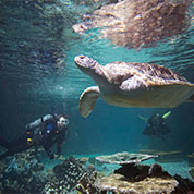 Photo of Sea Turtle swimming at the Aquarium