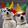 Two Dogs in costume for the Pup Parade