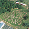 photo of corn maze