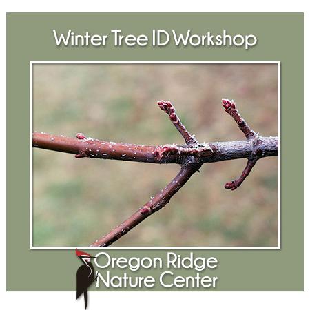 Winter Tree ID Workshop Flyer