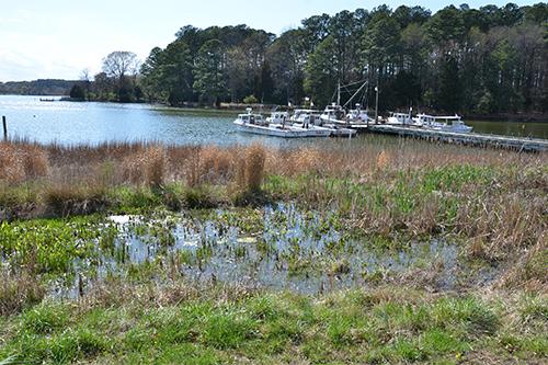 Wetlands at Environmental Concern