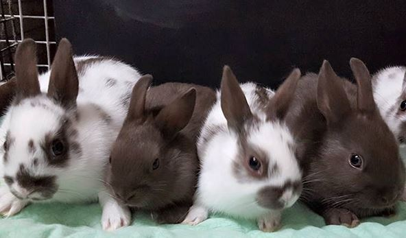 Rabbits await showtime