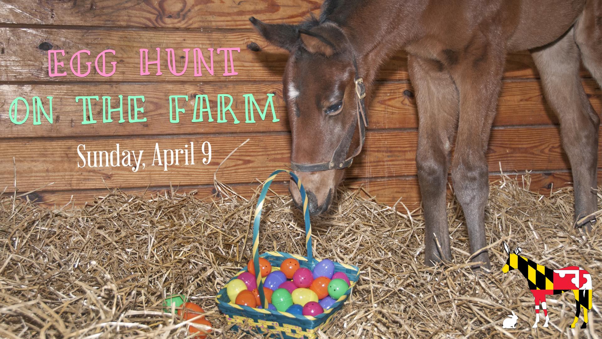 Egg Hunt on the Farm
