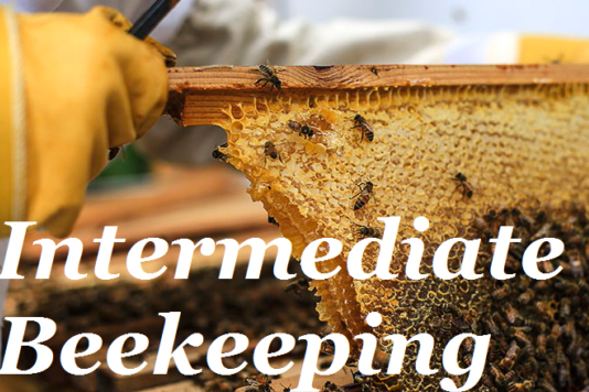 Intermediate Beekeeping course photo