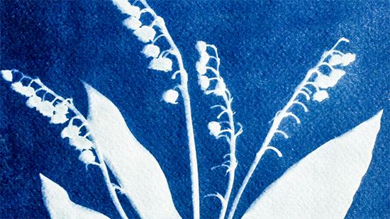 Floral cyanotype