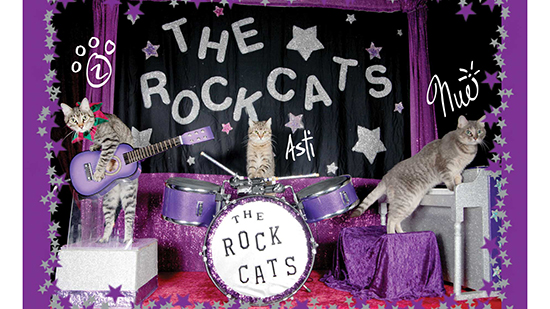 the rock cats performing